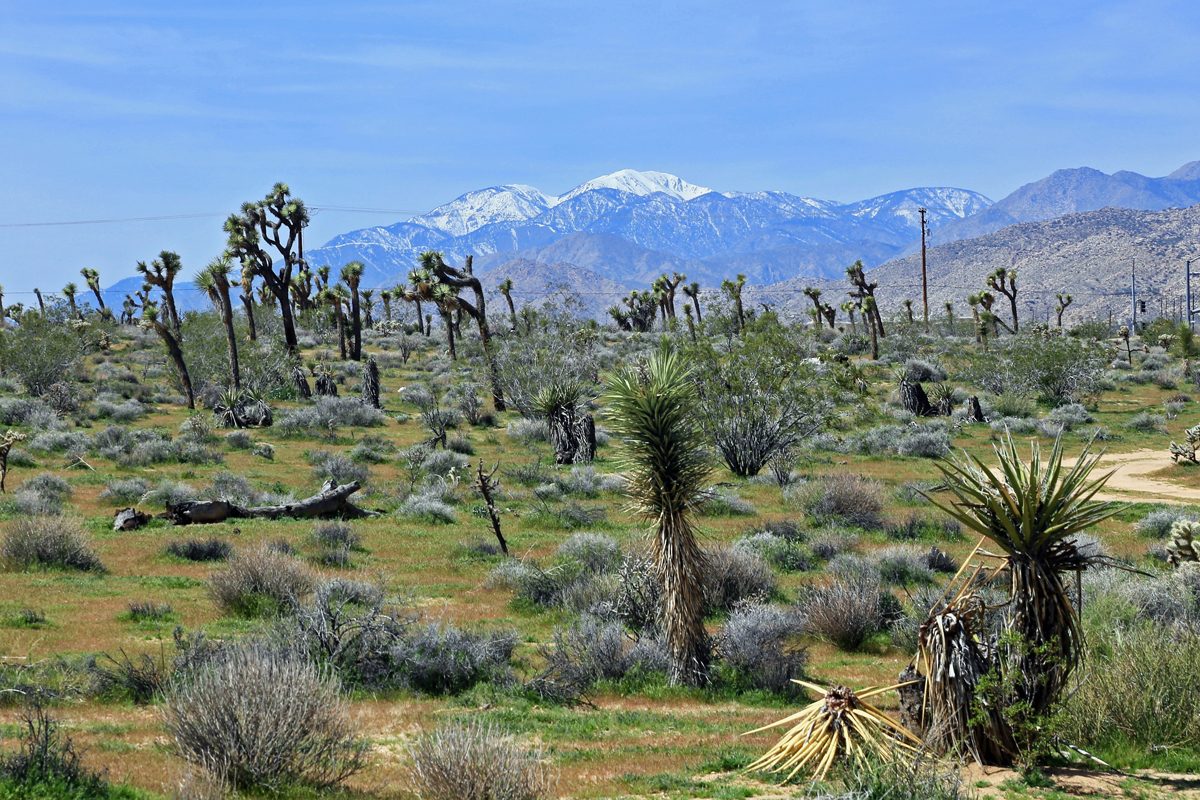 Joshua Tree National Park Reserve
